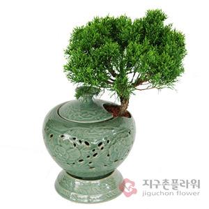 진백 도자기분재(2호)